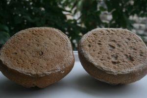 תוצאות הניסוי תחתית הלחם