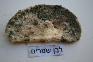 איך נראה העובש בלחם שמרים לבן