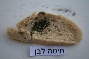 איך נראה עובש בלחם חיטה מחמצת לבן