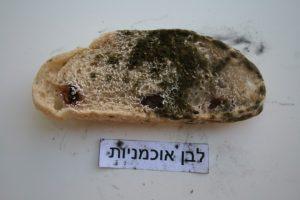 איך נראה העובש בלחם אוכמניות