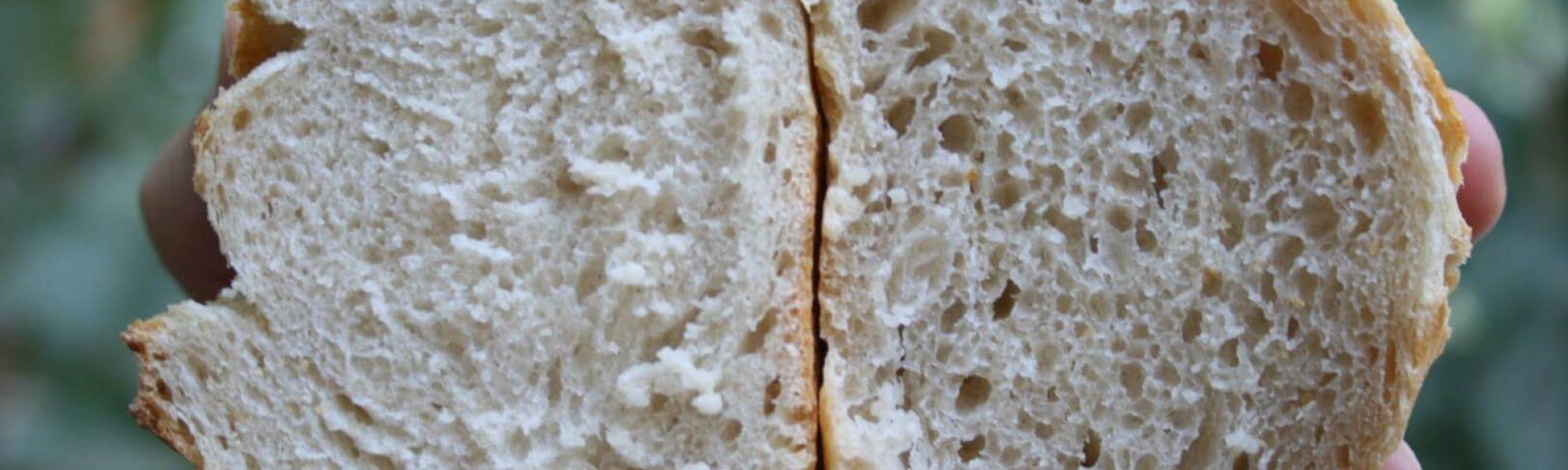 הבדל בהדירציה בין הלחם הרטוב ליבש